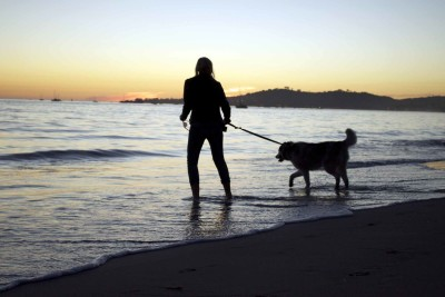 Dog Friendly Beaches Santa Barbara